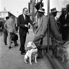 Vivian Maier  //  September 1956, New York, NY