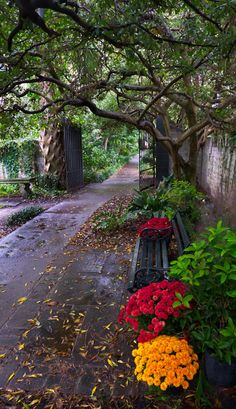 Walkway and Bench, Charleston, South Carolina Carolina Usa, Charleston South Carolina, Charleston Sc, Florida, Pathways, Beautiful Landscapes, Places To See, Beautiful Places, Scenery
