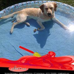 Casey lässt es sich, bei der Hitze, im Pool gut gehen.   Das kleine Loch, was sie beim toben in den Boden gemacht hat, konnten wir mit einem Rest unserer Car Wrapping Folie reparieren.  Selbst dazu ist die Folie gut ;P  Habt Ihr die Folie auch schon einmal Zweckentfremdet? Dann schickt uns Bilder! Wir freuen uns darauf ;)
