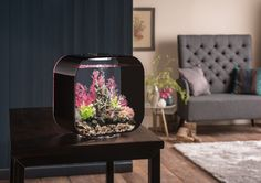 Love the exotic colours!   The biOrb Life 30 by OASE. A modernized and low maintenance aquarium for a office or home environment.