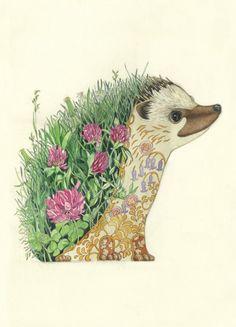 Hedgehog art print at The DM Collection, Artist Daniel Mackie Art And Illustration, Watercolor Illustration, Hedgehog Illustration, Animal Illustrations, Illustration Animals, Hedgehog Art, Hedgehog Tattoo, Hedgehog Drawing, Posca Art
