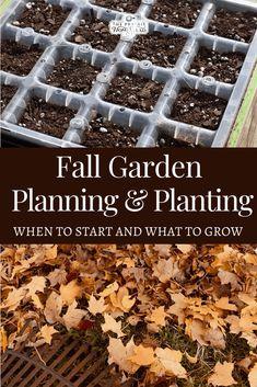 Fall Vegetables, Planting Vegetables, Vegetable Gardening, Gardening For Beginners, Gardening Tips, Herbal Remedies, Natural Remedies, Diy Garden Decor, Garden Ideas