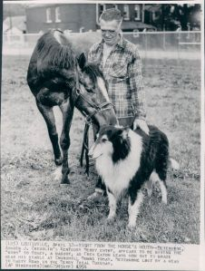 1146 Best Vintage collie images in 2019 | Rough collie