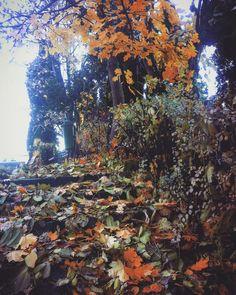 #favseason #novemberfalls #autumnlove #leaves #mykindoflove 🍁🍂🌰
