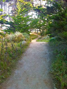 Point Lobos - California Central Coast