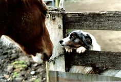 Dogs and horses are at my dream home!