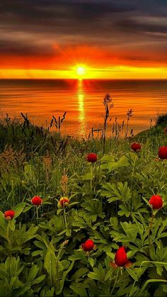 """premsaral: """" Good morning """" Wild peonies on the beach near Kavarna, Bulgaria. Beautiful World, Beautiful Images, Nature Pictures, Cool Pictures, Landscape Photography, Nature Photography, Nature Sauvage, Beautiful Sunrise, Science And Nature"""