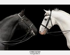Nikki de Kerf : Horses in black and white