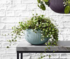 8995 Ft Ez a fonott virágtartó kaspó az erkély, a terasz vagy a konyhaablak díszítésére szolgál, tarka virágaival pedig vidám hangulatot áraszt. A kivehető műanyagbetét megkönnyíti a kaspó beültetését.