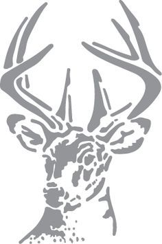 Whitetail Buck with Antlers
