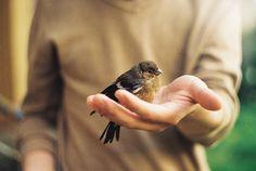 bird, animal, and black image