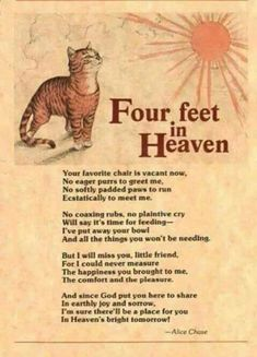Four feet in Heaven.loss of a kitty Pet Loss Quotes, Cat Quotes, Animal Quotes, Animal Poems, Horse Poems, 2015 Quotes, Crazy Cat Lady, Crazy Cats, Pet Loss Grief