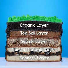This Sediment Layer Earth Cake is educational & yummy!   Organic Layer: Chocolate Cake  Top Soil Layer: Carrot Cake Subsoil Layer: Walnut Cake Parent Material Layer: Oreo Cookie Cake Bedrock Layer: Vanilla Cake  Watch video here: https://www.youtube.com/watch?v=Ruag9ZM2y5I