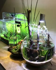 Planted Bowl Aquarium - plants with fish Planted Bowl Aquarium Planted Aquarium, Aquarium Garden, Aquarium Aquascape, Betta Aquarium, Nature Aquarium, Freshwater Aquarium Fish, Indoor Water Garden, Water Gardens, Small Gardens