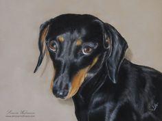 """Hundeportrait Dackel """"Lilly"""", Pastellkreide - Tierportrait nach Fotovorlage von Simone Hofmann - www.simone-hofmann.com - Pastel portrait of a Dachshund - Dog painting"""