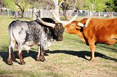 Bandalero Ranch