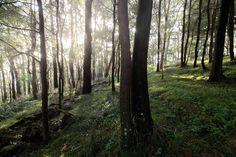 Metsä ravitsee monin tavoin. Se voi pyyhkiä huolet pois, kutsua läsnäoloon ja tehdä samaan aikaan vahvaksi ja pehmeäksi. Metsä kutsuu elämän äärelle. Se voi antaa kokemuksen yhteydestä. Minkälaiset metsäkokemukset ovat sinulle tärkeitä?