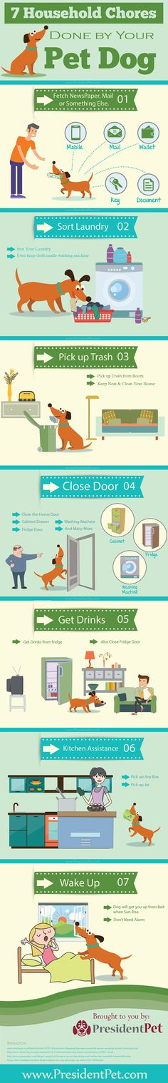 7 Household Chores done by your Pet Dog - Infographic will give you idea how are dog doing chores today. Here mentioned 7 types of chores can be done by dog Pet Dogs, Pets, Doggies, Best Dog Training, Potty Training, Wireless Dog Fence, Dog Potty, Cutest Dog Ever, Dog Health Care