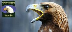 Greifvogelpark Alpine Coaster, Interactive Museum, Family Activities, Bald Eagle, Switzerland, Parks, Animals, Road Trip Destinations, Animales