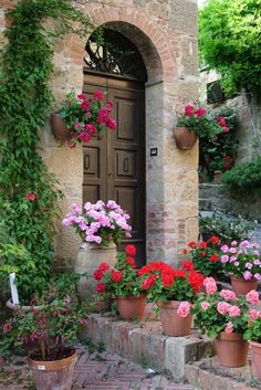 - Southern Exposure * potted geraniums in a perfect setting
