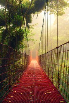 Suspension Bridge in Monteverde Cloud Forest Reserve, Costa Rica