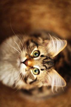 So eine hübsche Katze!