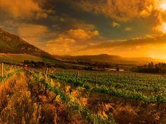 cape point, cidade do cabo, africa do sul, vinho branco, vinho tinto, vinicola, vinho, frança, borgonha, natureza, gastronomia, viagens, parreira, uva, passeio, romance, paisagem, design, arquitetura
