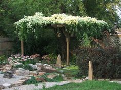 I would like to have this Sweet Autumn Clematis over an arbor at my gate.  http://healingmagichands.files.wordpress.com/2010/09/dscf1838.jpg