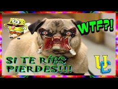 LOS MEJORES VINES 2017 EN ESPAÑOL/videos locos de risa /INSOLITOS. EL ME...
