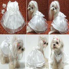 Dog wedding dress - could do for a golden retriever?