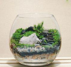 """LỊCH SỬ TIỂU CẢNH - TIỂU CẢNH LÀ GÌ ? Tiểu cảnh hay nói một cách dễ hiểu nhất là """"trồng cây trong bình thuỷ tinh"""" đã và đang được nhiều người yêu thích"""