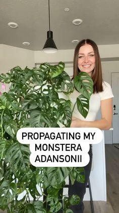 Hanging Plants, Potted Plants, Garden Plants, Indoor Plants, House Plants Decor, Plant Decor, Planting Succulents, Planting Flowers, Plantas Bonsai