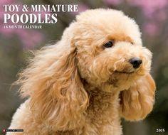 Toy & Miniature Poodles 2015 Wall Calendar by Willow Creek Press http://www.amazon.com/dp/1623433819/ref=cm_sw_r_pi_dp_BWJFub1V9G8CJ