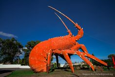 The Giant Lobster | PerfectExposue.org | Your portal to royalty free photographs