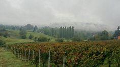 nebbia agli irti colli #monferrato #harvest14