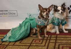 New York City is the capital of canine & kitty couture – NY Pet Fashion Show proved it