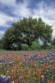 wildflowers and bluebonnets? YES.