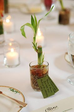cute green bamboo plant as a party favor on a wedding table | www.AnnasWeddings.com - Boston Wedding Photographer