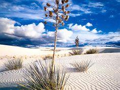 Deserto de Chihuahua - México