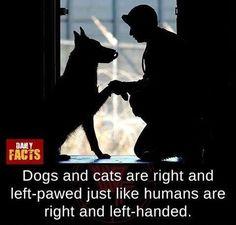 Daily Facts, Left Handed, Dog Cat, Cats, Gatos, Cat, Kitty, Kitty Cats