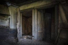 An Abandoned House Overtaken by Animals - new residents