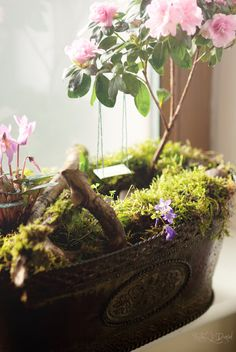 tiny garden on my window