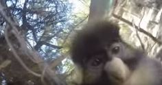 Major monkey business: See what happens when animal grabs GoPro from zoo visitor