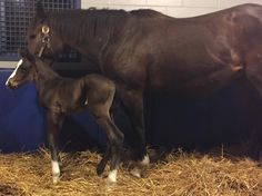 It's a colt! The first offspring of 2015's Triple Crown winner was born this week.