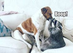 You've Been Booped