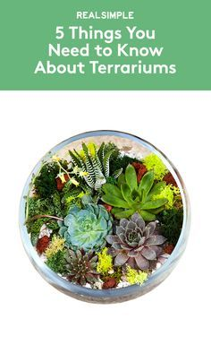 5 Things You Need to Know About Terrariums | These glass mini gardens are trendier than ever. Keep these basic tips in mind before you create or buy one of your own.