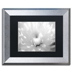 "Trademark Art Infrared Flower 2 Framed Photographic Print Matte Color: Black, Size: 16"" H x 20"" W x 0.5"" D"