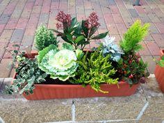 Inspirace pro podzimní truhlíky | Balkonové květiny