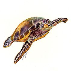 Watercolor Painting Sea Turtle 2013 | Yung
