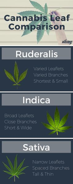 310 Best special images Cannabis, Herbs, Weed humor